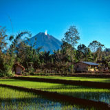 Volcano and rice fields