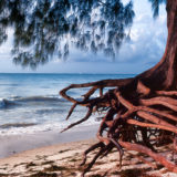 Tree at beach
