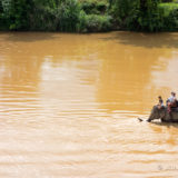 An elephant in the Nam Khang river