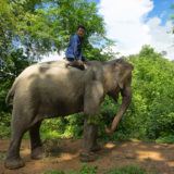 Elephant in Elephant Village
