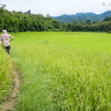 Two day trek through rice fields and jungle