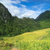 Karst mountains in the jungle, with mountain rice
