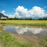 Rice fields and karst mountains
