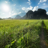 Karst mountains and rice fields