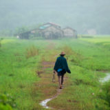 Man walking at rice paddy