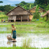 Man with canoe in rice paddymyanmar