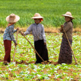 Women working in rice paddy