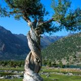 Tajikistan 3099250_