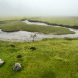 Swamp in the Andes, with mist
