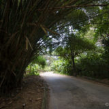 Road in Henry Pittier NP