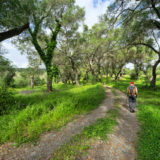 The Corfu trail in an olive orchard