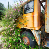 Old truck overgrown with flowers
