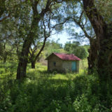 Cabin in olive orchard